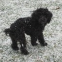 Stanley s first snow  thumb128