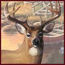 Deer thumb128
