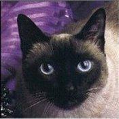 Cat03 thumb175