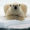 polarbear5675's profile picture