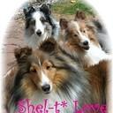 Shelti's profile picture
