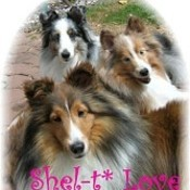 Sheltielove thumb175
