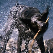 Wet dog thumb175