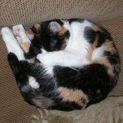 Pc cat thumb175