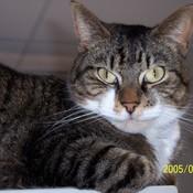 Brady atop monitor thumb175