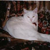 snowbearsmom's profile picture