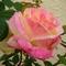 Marsha s rose thumb48