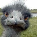 Emu small thumb128