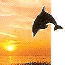 Dolphin thumb128