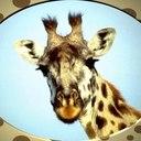 Giraffe thumb128