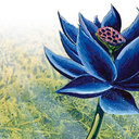 Black lotus art thumb128