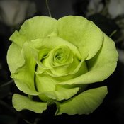 sage_roses_attic's profile picture