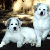 2 pups 300 x 212 thumb175