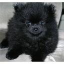 bonzbuyer_wbehd's profile picture