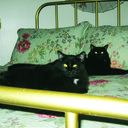 Green kitties thumb128