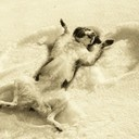 Snow angel dog sepia thumb128