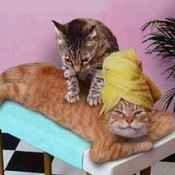 Funny pictures the cat massage 1ov thumb175