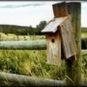 Empty nest 35 thumb128 thumb175