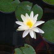 Pond_003_thumb175