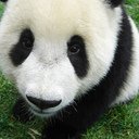 pandabag's profile picture