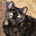 TrixieCloset's profile picture