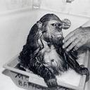 sammybaker's profile picture