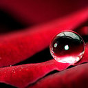 raindrops_on_roses's profile picture