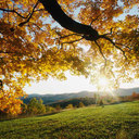 Autumn_leaves_thumb128