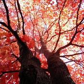 Tree thumb175