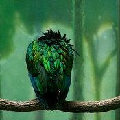 Greenbird ipad thumb175
