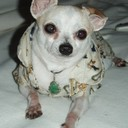 chihuahuamama's profile picture