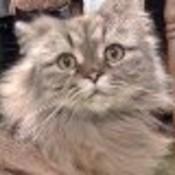 srcastleberry's profile picture