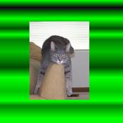 Iona406 logo green thumb175