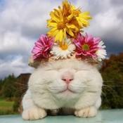 Whitecat thumb175