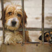 AnimalLovers4Rescues's profile picture