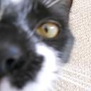 PawsomePendants's profile picture