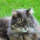 SusanHS's profile picture