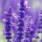 lavendergardncottage's profile picture