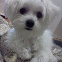 kafun's profile picture