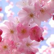 Spring_1_thumb175