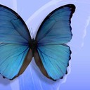 Blue butterfly5 thumb128