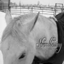 Horseblessy's profile picture