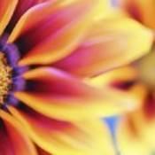 Copy of flowercrystal thumb175