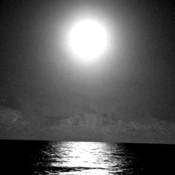 Silverlight's profile picture