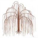 Weeping willow tree pictures thumb128