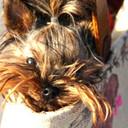 glamgrl212's profile picture