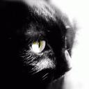 Sapphirestarr's profile picture