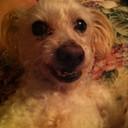 shiloh1180's profile picture