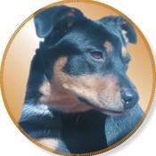 clothesden's profile picture