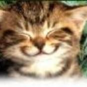 TheCatsMeowBox's profile picture